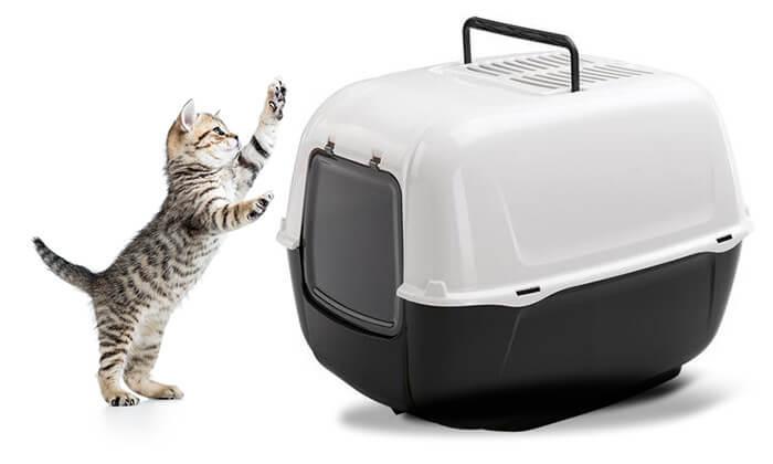 3 שירותים לחתול