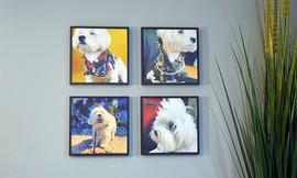 סטיקיז - התמונות שנדבקות לקיר