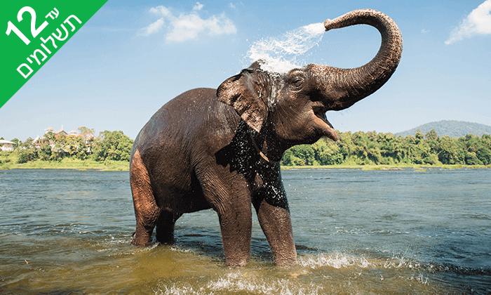 11 מראות וטעמים בדרום הודו - טיול מאורגן 9 ימים