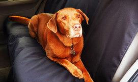 מגן מושב לכלב לרכב