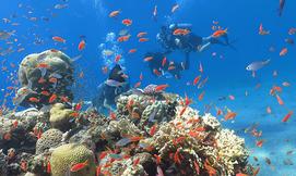 צלילה חווייתית בחוף האלמוגים