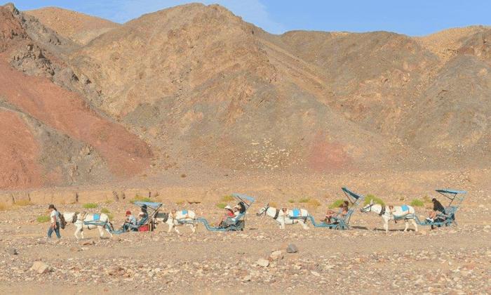 6 כרכרות חמורים בחוות הגמלים באילת