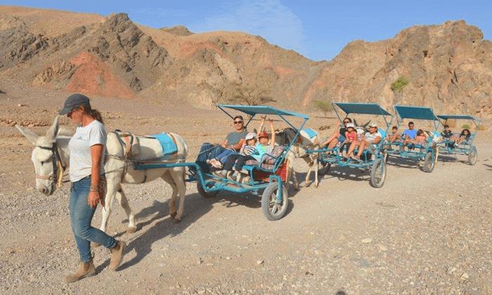 7 כרכרות חמורים בחוות הגמלים באילת
