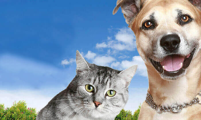 4 אמפולת פרונטליין פלוס לחתולים או לכלבים - משלוח חינם!