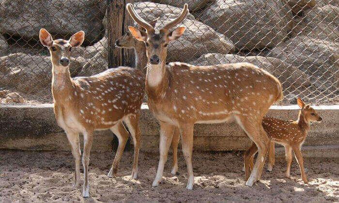 8 סוכות לכל המשפחה בחי-כיף, גן החיות בראשון לציון