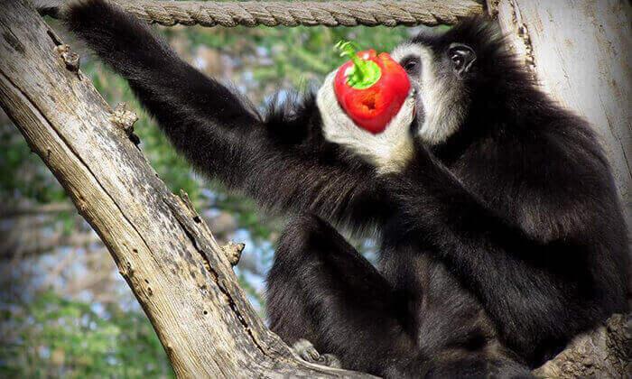 9 סוכות לכל המשפחה בחי-כיף, גן החיות בראשון לציון