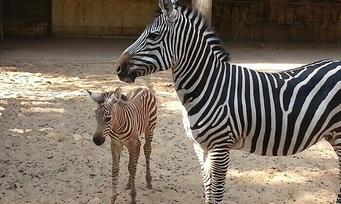 10 סוכות לכל המשפחה בחי-כיף, גן החיות בראשון לציון