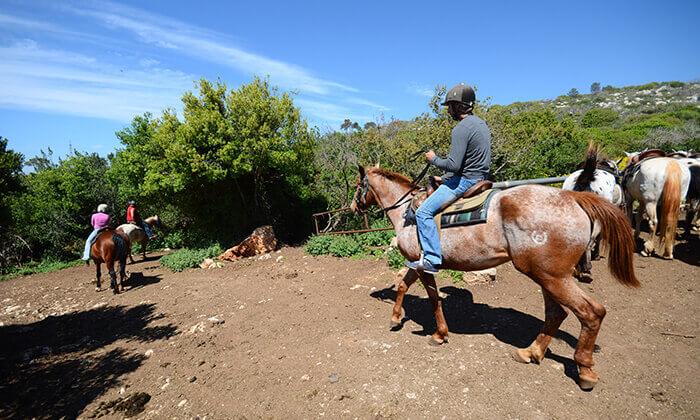 6 חוויית הרוכבים בבית אורן - יום כיף למשפחות